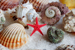 Image of seashells and starfish. On white towel Stock Photography