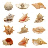 Image of seashells on white background Royalty Free Stock Images
