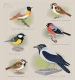 Image set of birds Royalty Free Stock Image