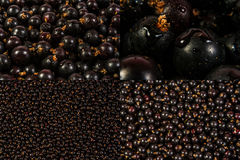 Image set of black currant texture. In different sizes royalty free stock image