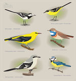 Image set f birdos Stock Image