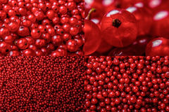 Image set of red currant texture. In different sizes stock photography