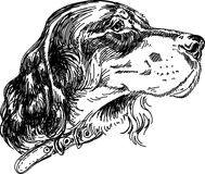 Image setter. Pen drawing Setter breed of dog head Stock Photo