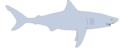 Image of shark animal Royalty Free Stock Photos