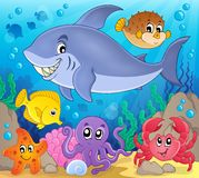 Image with shark theme 7 Stock Images