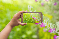 Image of shooting photographs with smartphone Royalty Free Stock Photos