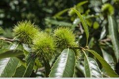 Bright green bush. Royalty Free Stock Photos