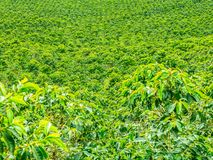 Coffee Plantation in Jerico, Colombia stock images