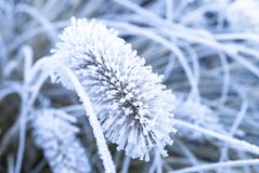 Frozen Plants with snow Stock Photography