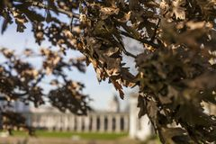 The Greenwich Park, white buildings and dry leaves. This image shows The Greenwich Park on a sunny day. It was taken in February 2018, there are branches with Stock Photo