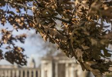 The Greenwich Park, leaves and branches. This image shows The Greenwich Park on a sunny day. It was taken in February 2018, there are branches with some brown Stock Photography