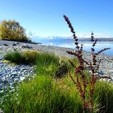 NewZealand nature. Image shows New Zealand& x27;s mount cook in the distance Royalty Free Stock Photography