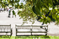 The Hyde Park, London - the benches. Stock Photography