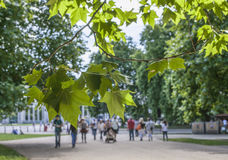 The Hyde Park, London - the bright green leaves. Royalty Free Stock Images