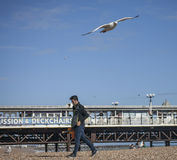 People in Brighton and the seagulls . Stock Image