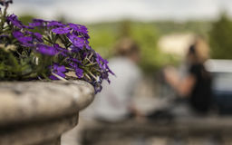 Flowers in the streets of London. This image shows a some violet flowers in one of the streets of London Stock Photos