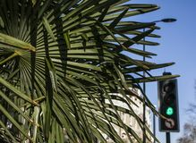 Streets of London, palm leaves and a blue sky. This image shows a street in London, with the focus on some palm trees. It was taken on a sunny day stock images