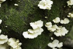 Mushrooms in the moss stock image
