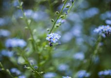 In the garden, spring in England - blue flowers. This image shows a view of a garden in spirng. It was taken in May 2018 London, England. It focuses on some stock photography