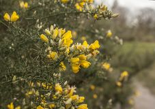 Parks of London - yellow flowers. This image shows a view of one of the parks in London. It was taken on a gloomy day in January 2018 Royalty Free Stock Images