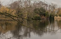 Parks of London - branches and waters. This image shows a view of one of the parks in London. It was taken on a gloomy day in January 2018. It shows a pond Royalty Free Stock Image