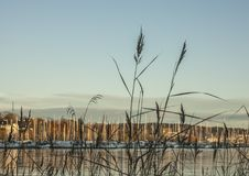 Oslo - the fjord - boats and some reed. Royalty Free Stock Images