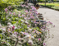 London - flowers and people in the park. This image shows a view of a park in London with some colorful flowers and shiny leaves and people chilling on the Stock Photography