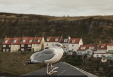 Whitby, Yorkshire, England - a seagull and some houses. This image shows Whitby - a small town in Yorkshire on a cloudy winter day; there`s a seagull in the Stock Photo