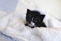 Small black kitten snuggling in the blankets stock photo