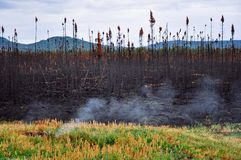 A smoldering forest fire still smokes near the Yukon. A image of a smoldering forest fire still smokes near the Yukon stock photo