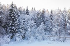 Image of snow white winter forest landscape royalty free stock photos