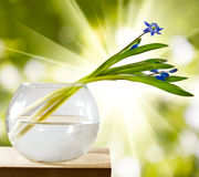 Image of snowdrop in a vase on a wooden table Stock Image