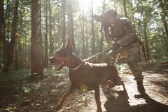 Image of soldier in helmet and with submachine gun and dog. On task in forest royalty free stock photos