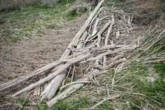 Stack of Driftwood stock photography