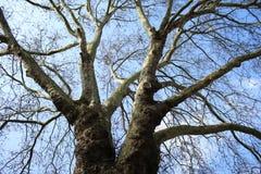 Image sous un arbre avec le fond de ciel photographie stock