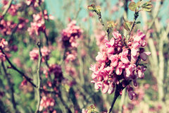Image of Spring Cherry blossoms tree. abstract background. dreamy concept Stock Images