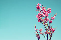 Image of Spring Cherry blossoms tree. abstract background. dreamy concept Royalty Free Stock Photography