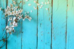 Image of spring white cherry blossoms tree on blue wooden table Stock Photos