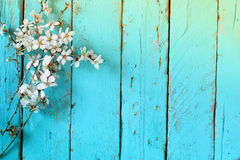 Image of spring white cherry blossoms tree on blue wooden table. vintage filtered image Royalty Free Stock Photos