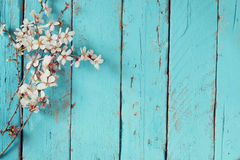 Image of spring white cherry blossoms tree on blue wooden table. vintage filtered image Royalty Free Stock Images