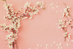 Image of spring white cherry blossoms tree Royalty Free Stock Photography