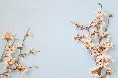 Image of spring white cherry blossoms tree Stock Images