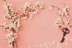 Image of spring white cherry blossoms tree Royalty Free Stock Photo