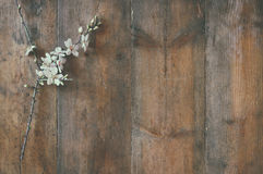 Image of spring white cherry blossoms tree on wooden table Stock Photos