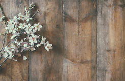 Image of spring white cherry blossoms tree on wooden table Royalty Free Stock Photos