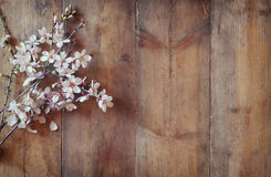 Image of spring white cherry blossoms tree on wooden table Stock Photography