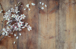 Image of spring white cherry blossoms tree on wooden table Royalty Free Stock Images