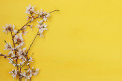 Image of spring white cherry blossoms tree Royalty Free Stock Photos