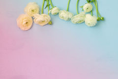 Image of spring white flowers on wooden background Royalty Free Stock Image