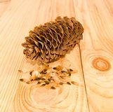 Image of spruce cones Royalty Free Stock Photo
